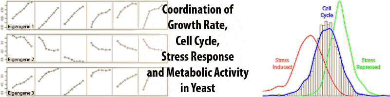 Coordination of growth rate, cell cycle, stress response and metabolic activity in yeast.